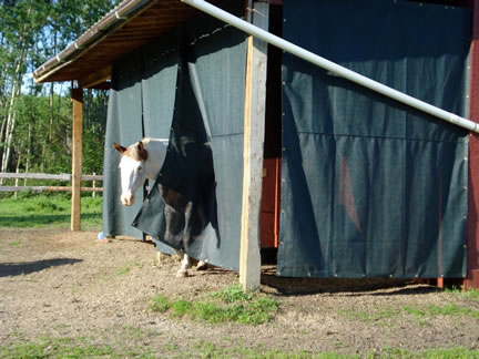 Screens For Barns And Stables