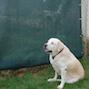Dog Kennel Shade