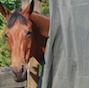 HorseFlyNet™
